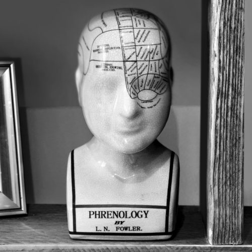 Phrenology model in reception at Biddenden Chiropractic. We offer a range of treatments for back, shoulder, knee and neck pain.